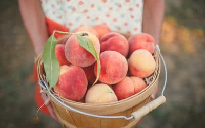 Frozen Peach Pie Filling